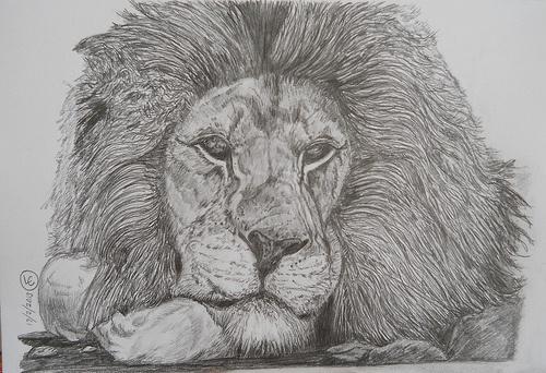 #Art Abdullah Pencil Sketch of an African #Lion