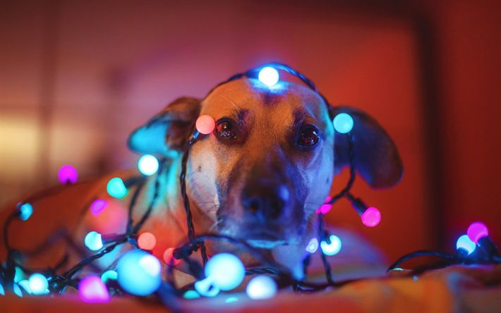 Download wallpapers New Year, dog, glowing garland, Christmas