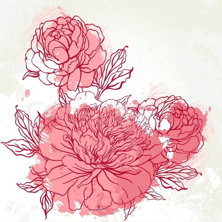 Beautiful peony bouquet design on beige background. Hand drawn vector illustration. | Vector | Colourbox on Colourbox