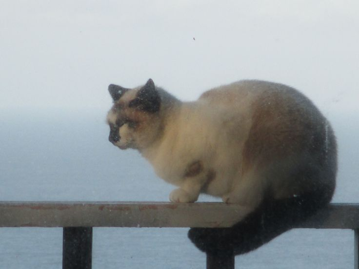 Ocean View with Cat, photo by Goldwing 2016