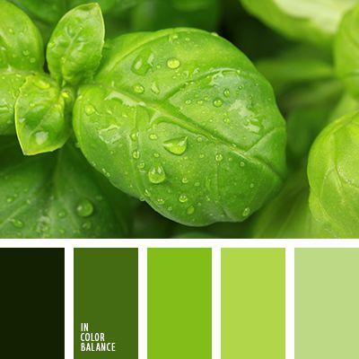 монохромная зеленая цветовая палитра, монохромная цветовая палитра, оттенки зеленого, подбор цвета, сочетание цветов для декора интерьера, цвет базилика, цвет зеленого чая, цвет зеленого яблока, цвет листьев базилика, цветовое решение для