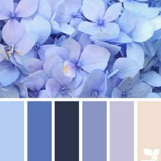 Periwinkle, Lilac & Navy...