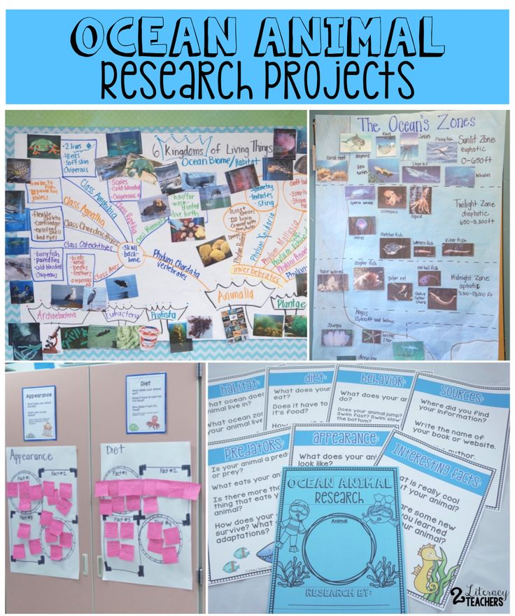 Classroom Research Ideas ~ Ocean animal research writing projects the resources used