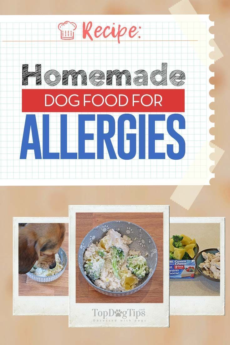 Recipe Homemade Dog Food For Allergies Make Dog Food Homemade