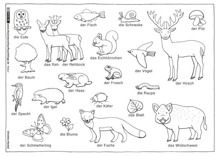 Natur - Wald Tiere Pflanzen - Henkel