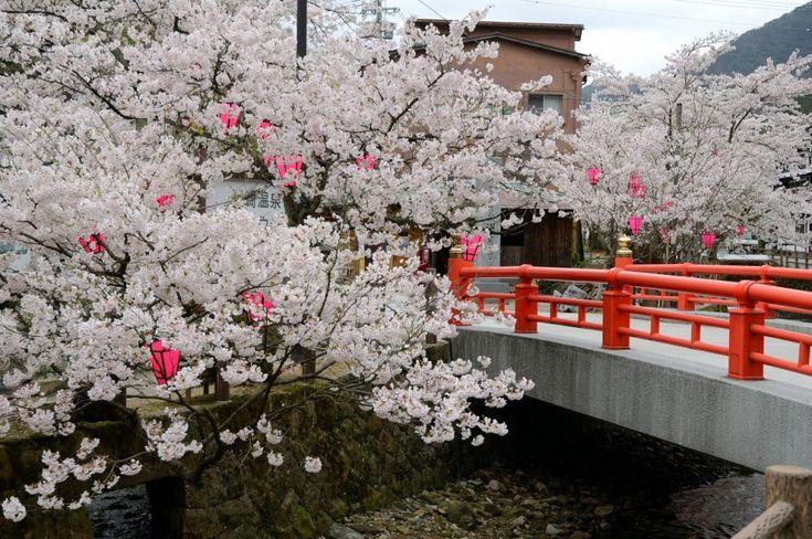 kirschbl te in kinosaki japan japan in 2019 cherry. Black Bedroom Furniture Sets. Home Design Ideas