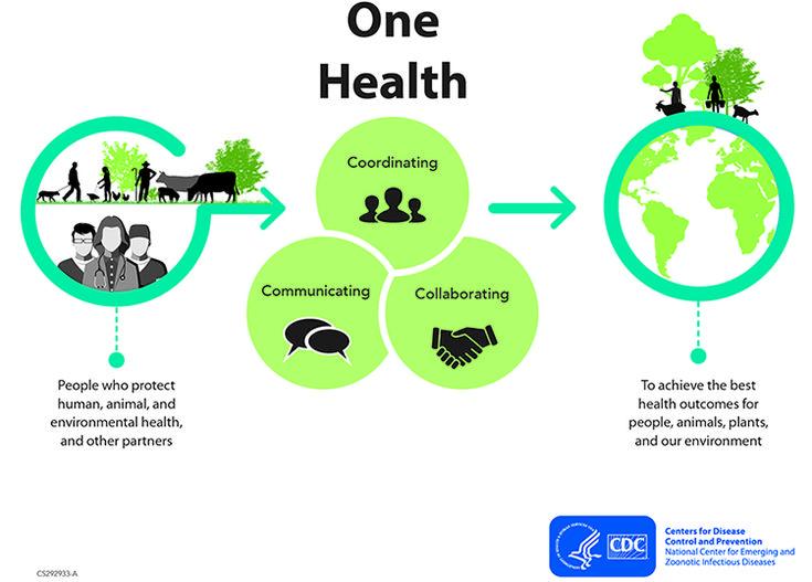 One Health Inforgraphic First Health Health Health Goals Motivation