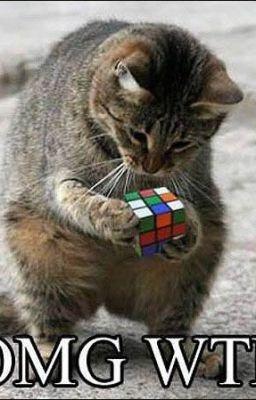 OMG!: Kitty Cat, Problems Solving, Funny Pics, Funny Animal Pictures, Rubik Cubes, Funny Pictures, Funny Cat, Fat Cat, Funny Stuff