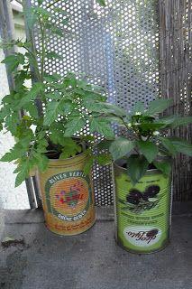 Upcycling: Schöne Töpfe für Eure Pflanzen