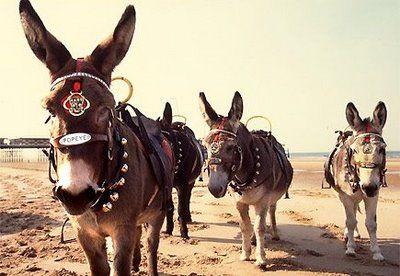 Google Image Result for http://bp1.blogger.com/_Kyj6MaNLbVE/SFRIO8GYkZI/AAAAAAAAESk/UQ9bi9oY__s/s400/donkeys-on-blackpool-beach.jpg