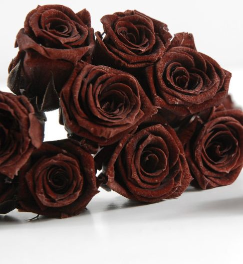 Color Chocolate - Chocolate!!! brown roses | Color ...