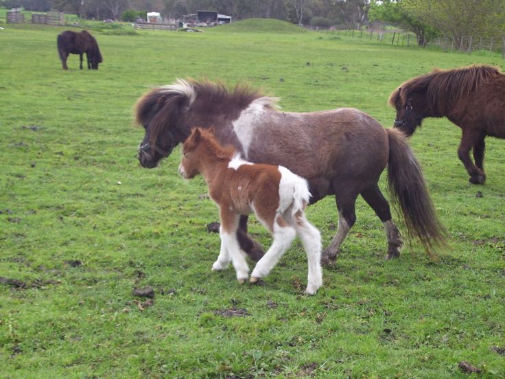 Alice with her second foal, Skipper.