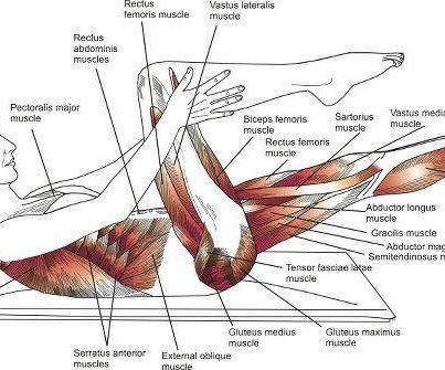Increíble la cantidad de músculos beneficiados x el Pilates !!!!, te invito a probar 1 clase GRATIS en Pilates Les Sens, Luis Pasteur 5262, Vitacura, llamamos al 27106336....