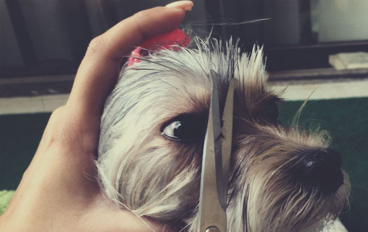 How To Get Rid Of Black Around Dogs Eyes