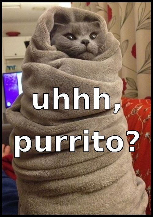 Lol Funny Cats 2015 (04:07:17 AM, Thursday 30, April 2015 PDT) – 20 pics