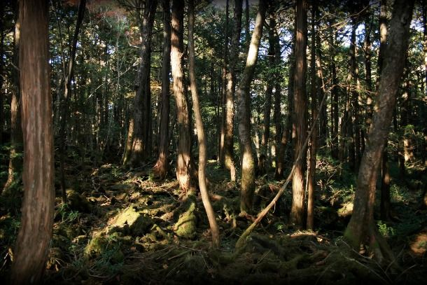 A Creepy Suicide forest