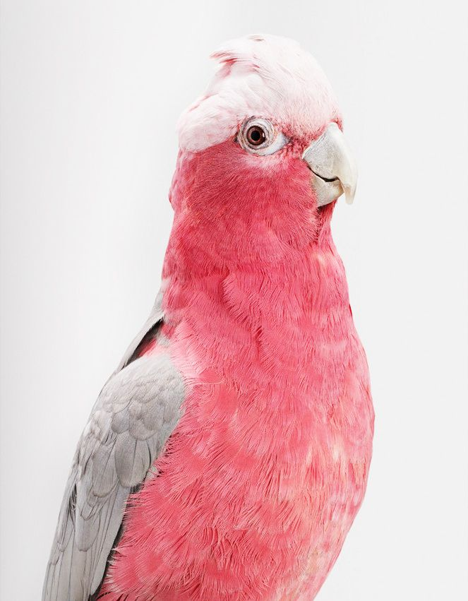 Flight of Fancy: 14 Photos of Birds With Major Personality via @MyDomaine