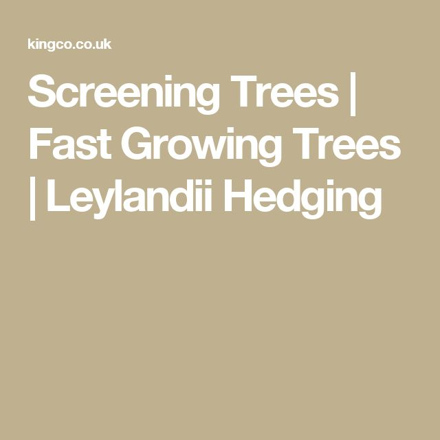 Screening Trees | Fast Growing Trees | Leylandii Hedging