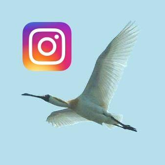 미시령에서 on Instagram (Began June 26, 2016) ▶ https://www.instagram.com/misiryeong