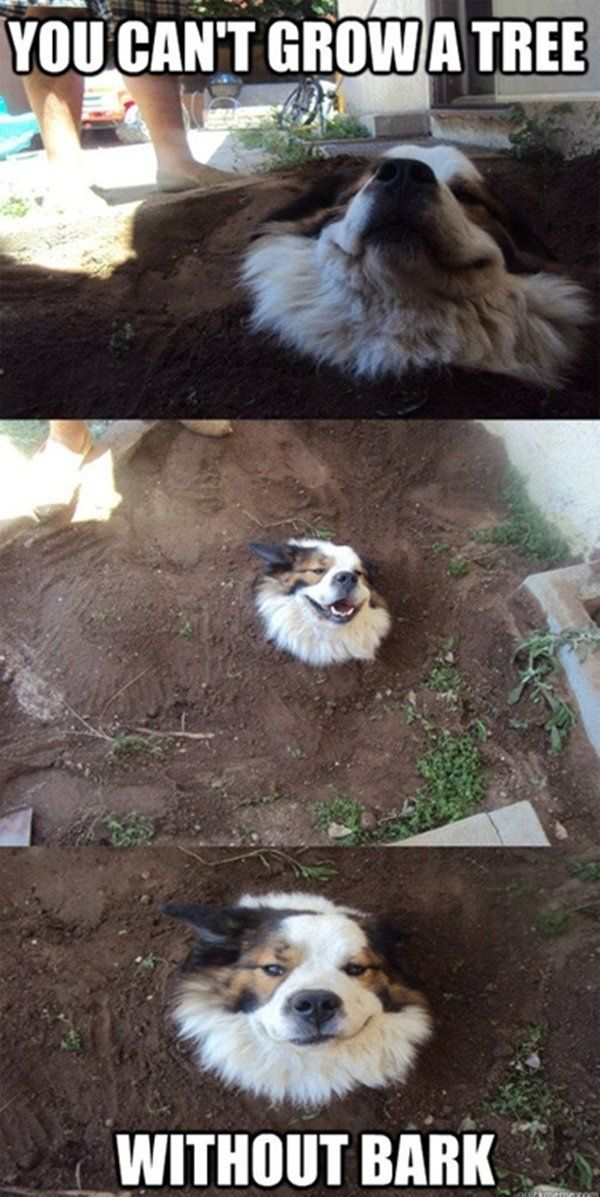 30 funny animal captions - part 2 (30 pics) You can't grow a tree... Without bark!