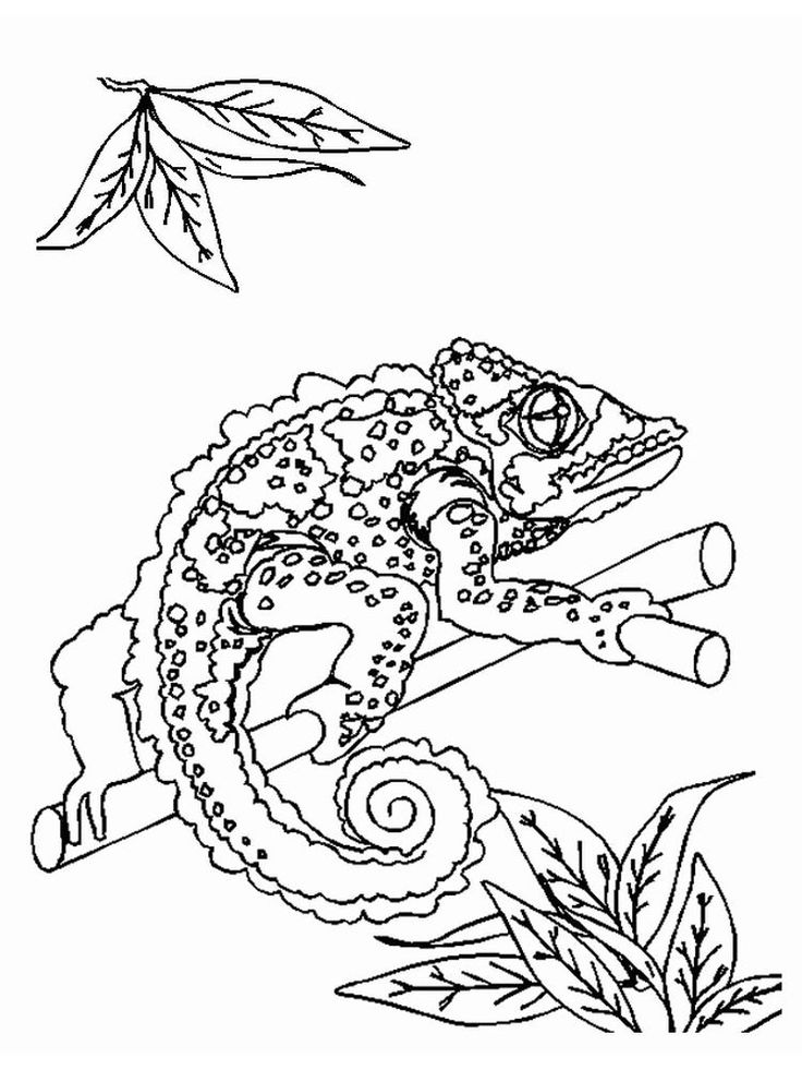 Monitor Lizard Coloring Pages. Lizards are fourlegged
