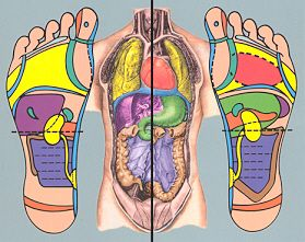 "Foot Reflexology and Foot Massage Tips and Techniques | Foot reflexology is ""pressure therapy"" and involves applying focused pressure to certain known reflex points located in the foot to cure or prevent disease. Foot reflexology is based on the premise that our nerve zones or reflex points go from the bottom of our feet to the top of our... 
