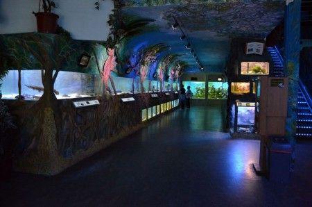 ZOO Mořský svět - největší mořské akvárium V ČR