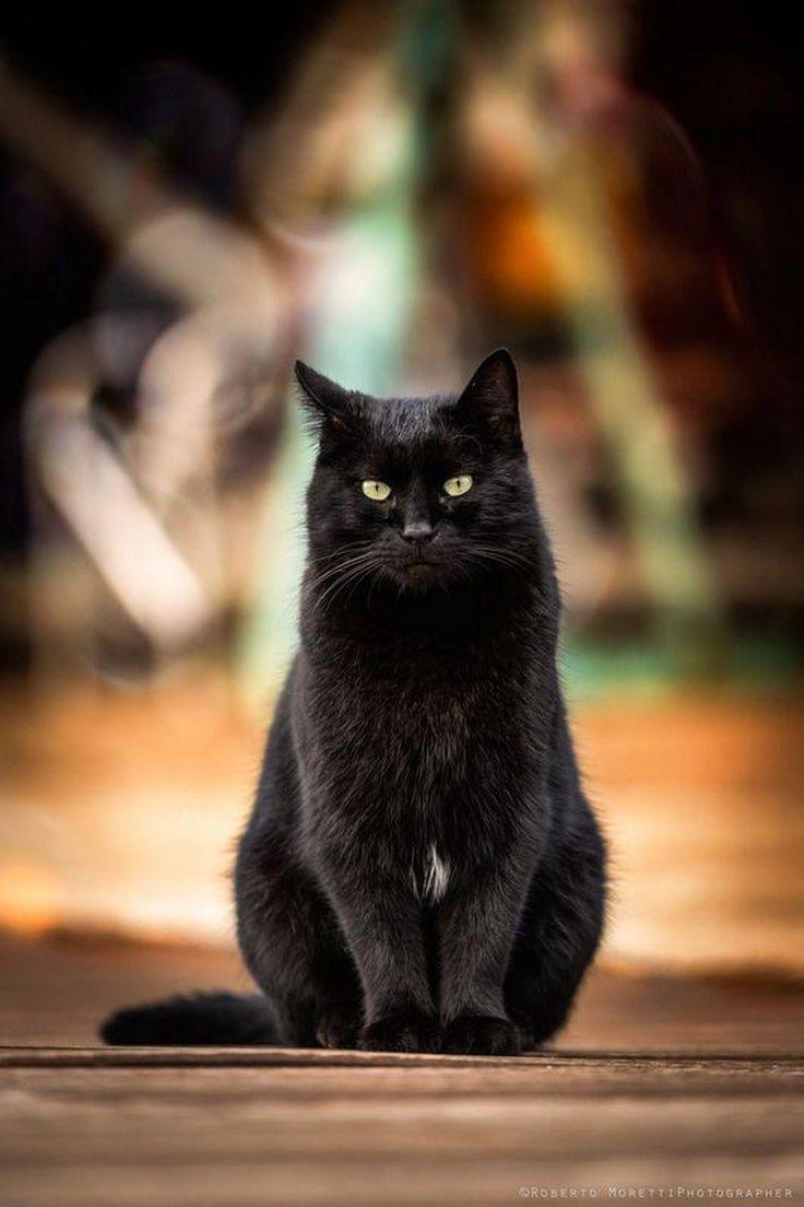 картинка чорного кота желание