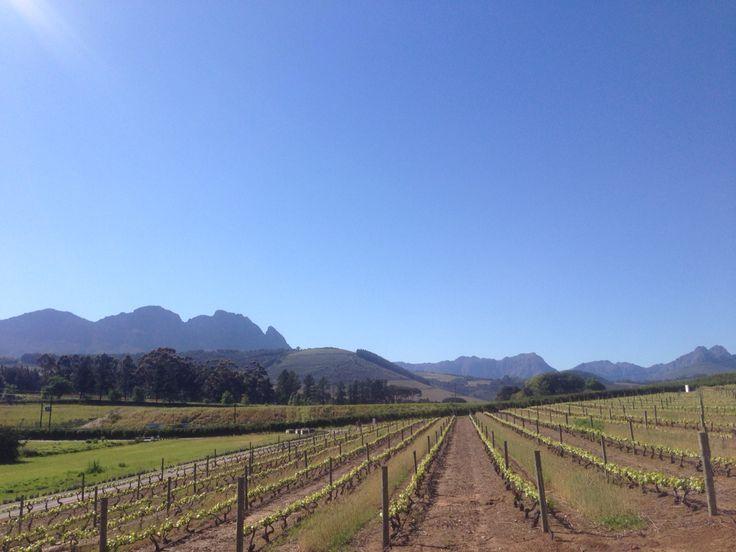 L'Avenir Wine Estate - Stellenbosch - Cape Town