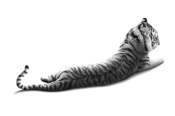 I'll go stripes drawing by Colin Prestage