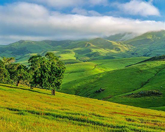 The Hills of Arroyo Grande, California via MuralsYourWay.com