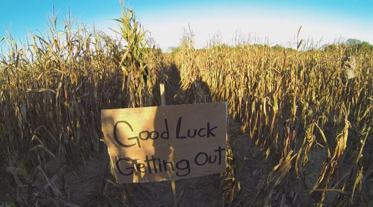 Haunted Corn Maze | IJ-cornfield-punishment1107.jpg