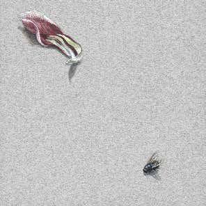 Katarzyna Makieła-Organisty – Kraków, Poland Płatek tulipana i mucha plujka, tempera żółtkowa na papierze, 9,8x9,8 cm