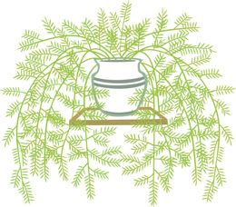 Asparagus fern is a shrub of the lily family, which can be grown both as a houseplant and ornamental plant. It is a low maintenance plant, that be grown quite easily. Know more about asparagus plant, its care and maintenance with this article.