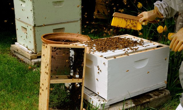 Habits and Traits of Honey Bees | Bee keeping, Backyard ...
