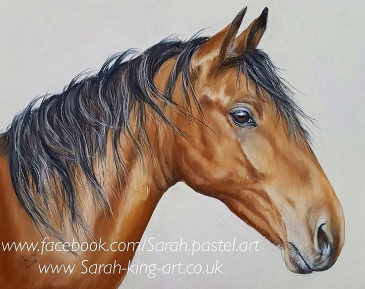 Little horse portrait finished, name suggestions welcome. Soft pastel, this one is for sale. #horselove #equineart #equestrian #horse #pasteldrawing #softpastel #drawing #painting #art #artistsoninstagram #originalartwork #petportrait #commissionswelcome #horses #horseportrait #forsale #giftideas #animals #yorkopenstudios2017
