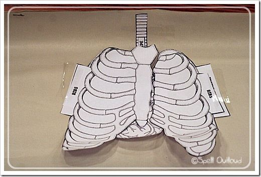 Learn about the different parts of the respiratory system. Make a paper vest to slip over a child while talking about the various parts.