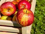 Хитрости зимнего хранения фруктов - хранение яблок, хранение урожая