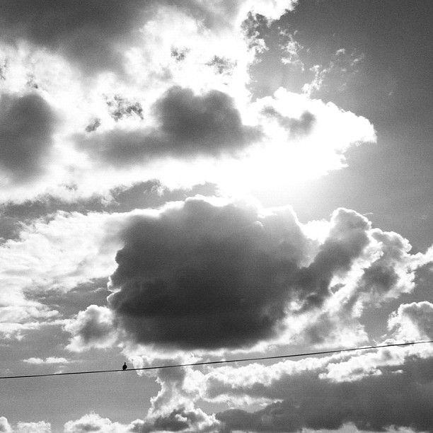 #birdonawire #clouds #sunlight #birds #travel #roadtrip