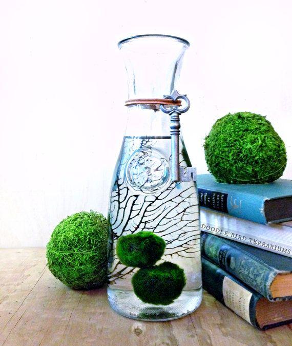 Large marimo moss ball terrarium aquarium moss bottle for Moss balls for fish tanks