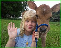 Southside Miniature Cattle - Miniature Jersey Cows,Miniature Jerseys,Miniature Jersey Cattle,Mini Jersey Cattle, Miniature Jersey Dairy Cattle,Miniature Jerseys For Sale,Certified Miniature Jersey Cattle, Miniature Jersey Breeder,NY,New York,Miniature Jer