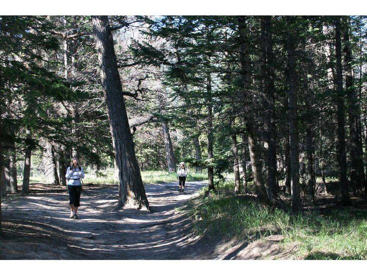 CALGARY, AB.;  SEPTEMBER  9, 2015   --  Walking meditation for Forest Bathing article for Outdoors.  section(Jody Robbins/Calgary Herald) For Outdoors story by Jody Robbins.