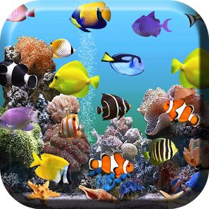 Amazing Aquarium And Sea Pictures HD Wallpapers
