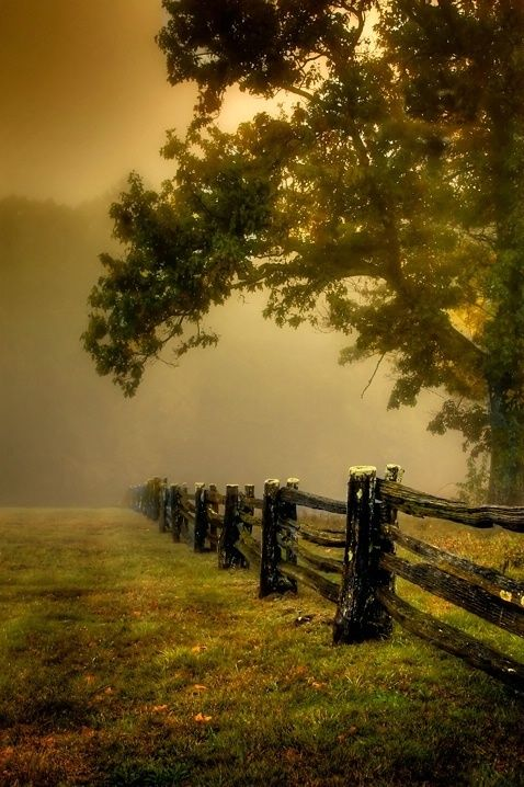 weathered fences