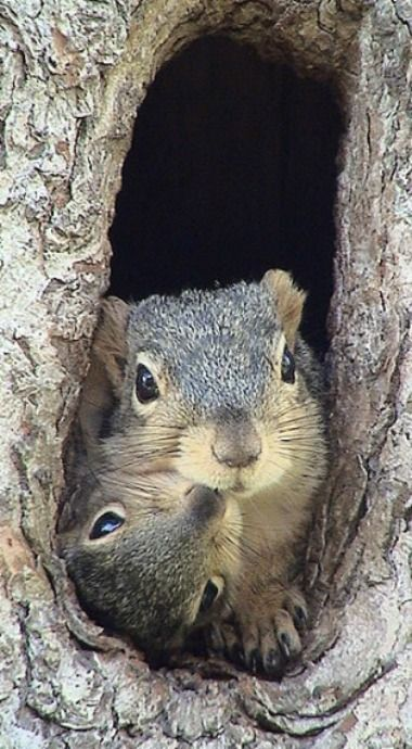 Momma squirrel and Skitter