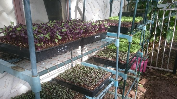 Learn how grow Microgreens follow The Marty's Garden Show Podcast and learn how to grow food fast in urban places and small spaces! See You There Marty