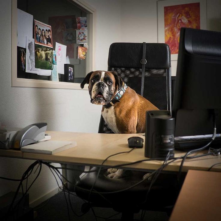 Honden op de werkvloer! Leuk of niet? http://www.intermediair.nl/weekblad/20130411/#7