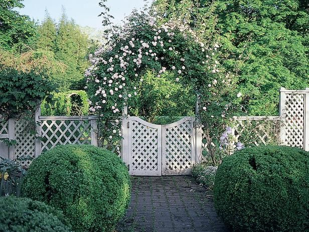 creative rose trellis | How to Create a Rose Trellis Arch : How-To : DIY Network