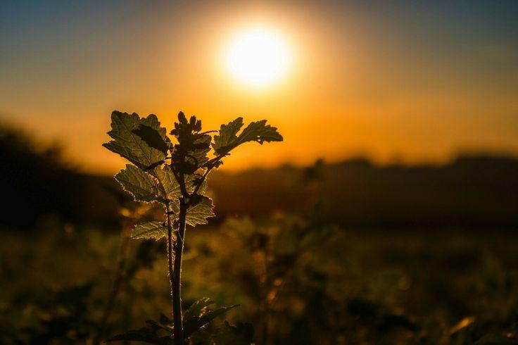 Da wir alle  (oder zumindest die meisten) schon jetzt sehnsüchtig auf den Sommer warten 😄  #landscapephotography #sunset #vogelsberg #wetterau