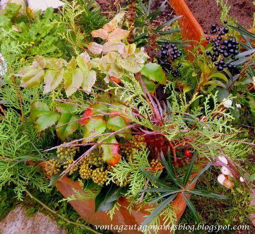 @vontagzutagmari Herbstdeko für Cottotöpfe mit allem, was der Garten so hergibt. Koniferen, Reisig, Miscanthus, Mahonie, Stechpalme, Hagebutten, Efeu, Liguster und Schneebeeren. http://vontagzutag-mariesblog.blogspot.co.at/
